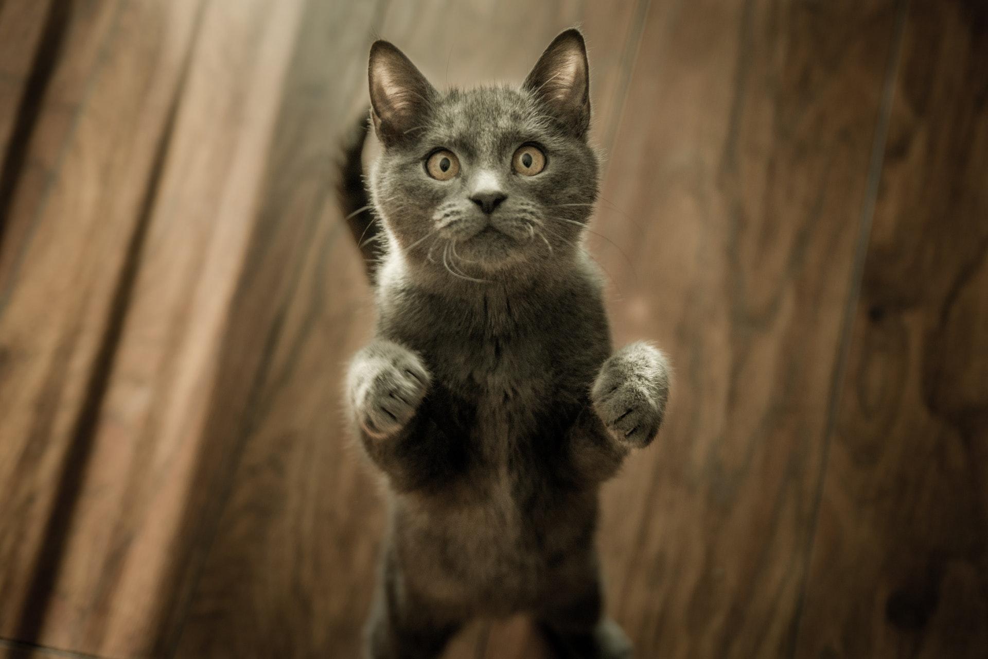 chatière automatique, fontaine à eau pour chat...