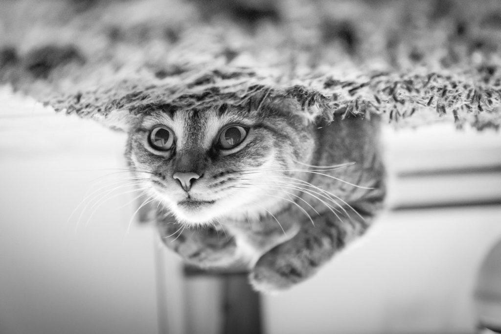 chat nage sous l'eau