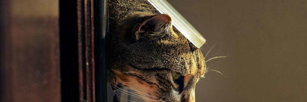 chatière porte pour chat