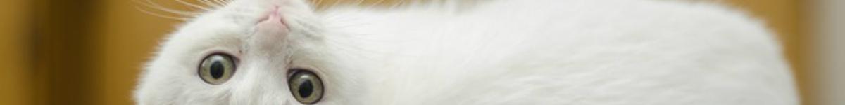Guide spécial: chatière électronique avec ou sans collier